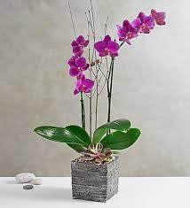 Orchid Bouquet Orchid Sale Orchid Plants U0026 Orchid Bouquets 1800flowers