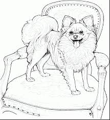 terrific papillon dog coloring pages with coloring pages of dogs