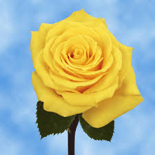 global roses yellow roses bouquet and flowers delivery global