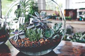 a new twist on terrariums chicagoland gardening