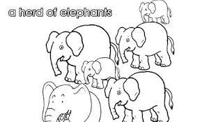 collective nouns herd elephants kidspot