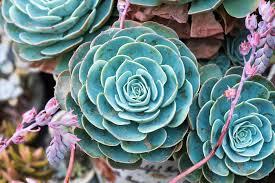potpourri ikea plants best place to buy plants online plant pots u