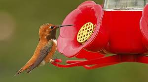 which type of feeding is essential to attract hummingbirds
