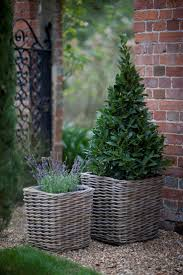 best 25 rattan planters ideas on pinterest wall gardens