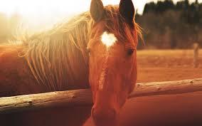 Pferdezentrum Bad Saarow Fairness Leidenschaft Kommunikation Horsemanshipcenter