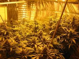 chambre de culture complete pas cher chambre de culture complete cannabis culture du cannabis de a z