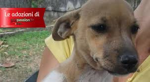 cani in cerca di casa cucciola in adozione a roma lul禮 cerca casa petpassion