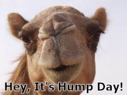 Hump Day Camel Meme - 27 best hump day images on pinterest cow buen dia and hump day