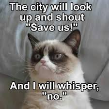 Mean Cat Memes - the city will look up and shout save us and i will whisper no