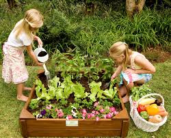 how to grow your own vegetables with kids room to grow