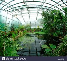 Botanical Gardens Oxford Of Oxford Botanic Garden Hothouse And Water Lillie S