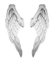back wings by ogre toe on deviantart
