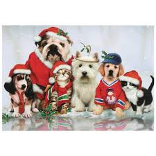 christmas cards dogs christmas lights decoration