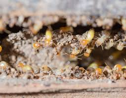Winged Termites In Bathroom Termites The Bug Blog By Cayce Exterminating