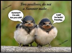 Freezing Meme - two swallows do not a summer make summer i m cold are you cold