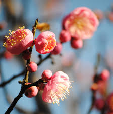 fruit tree maintenance u2013 due now the greenery nursery and garden