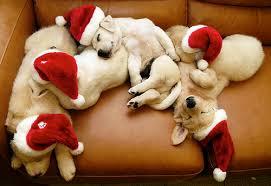 dog christmas christmas safety for your dog casey stl