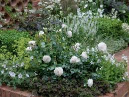 companion plants and roses hgtv