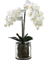 orchid plants for sale spectacular deal on allstate floral phalaenopsis orchid plant in