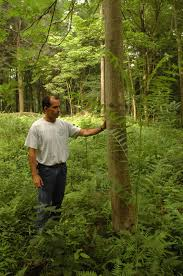 south central pennsylvania native plants central pennsylvania forestry invasive species highlight tree of