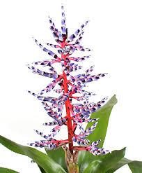 Buy House Plants Buy Flowering House Plants Online Bakker Com