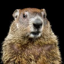 groundhog national geographic