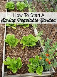 starting an urban vegetable garden video and photos