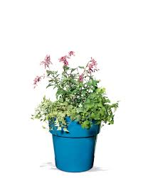 Self Watering Patio Planters by Hanging Baskets Hanging Planters Hanging Flower Baskets U0026 Pots