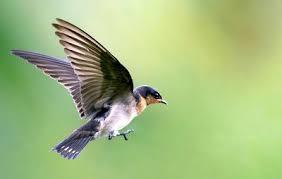California Backyard Birds by 10 Backyard Birds You Should Attract To Your Garden Hello Insect
