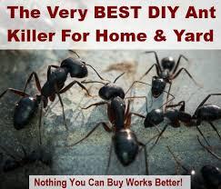 Ants In Backyard Best 25 Sugar Ant Killers Ideas On Pinterest Sugar Ants Ant