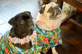Halloween Hawaiian Shirt by A Boy A And A Pug A Hawaiian Halloween