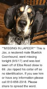 bluetick coonhound in florida 25 best memes about coonhound coonhound memes