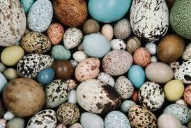 cracking the code on egg coloration audubon