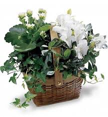 plant delivery buy plants online order plant delivery gifttree