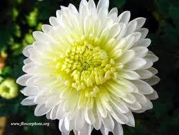 common wedding flowers the 10 most popular white wedding flowers bestbride101