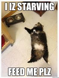 Plz Meme - i iz starving feed me plz hungry cat quickmeme