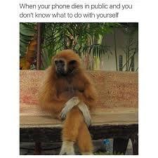Funny Monkey Meme - best 25 funny monkey memes ideas on pinterest 重庆幸运农场经验之