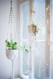 Best Living Room Plants Best 25 Macrame Plant Holder Ideas On Pinterest Macrame Plant