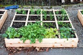 easy vegetable garden josaelcom five veg tips calgary coach raised