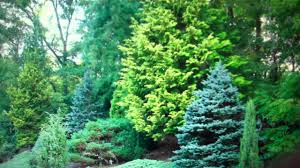 evergreen trees for sale cheap 2 89 from tn wholesale tree