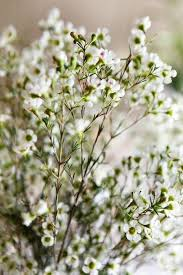 White Flowers Pictures - best 25 wax flowers ideas only on pinterest bouquet bridal