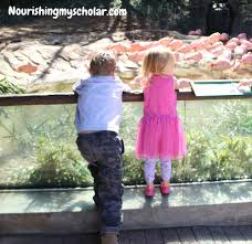 our day at zoo atlanta nourishing my scholar