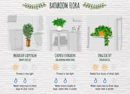 Best Plant For Indoor Low Light The Easiest Indoor Plants And How To Care For Them Urban Gardens