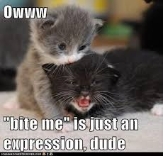 Funny Kitten Meme - pics of kittens with captions pictures of animals 2016