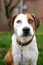 rescue dog star of downward dog ned