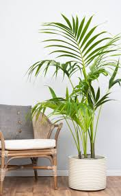 best of biggest indoor plants