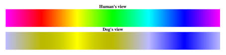 are dogs color blind the answer is no american kennel club