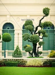 lawn decorative trees in grand palace bangkok thailand stock