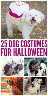 human dog costumes for halloween 115 best dog costume ideas images on pinterest animals dog