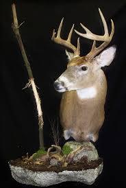 deer scrape mookie u0027s next deer mount taxidermy ideas